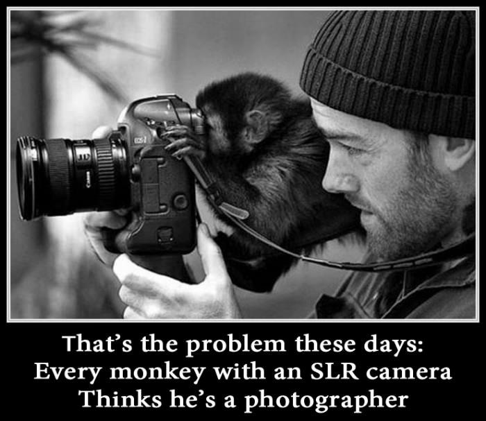 "Monkey taking a picture with a DSLR camera. Picture is captioned: ""That's the problem these days. Every monkey with an SLR camera think's he's a photographer"""
