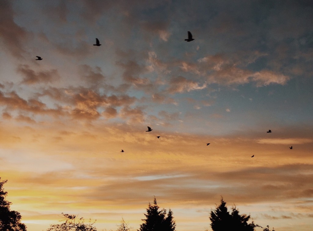 orange and blue tinted sunset sky with a flock of birds flying across the scene