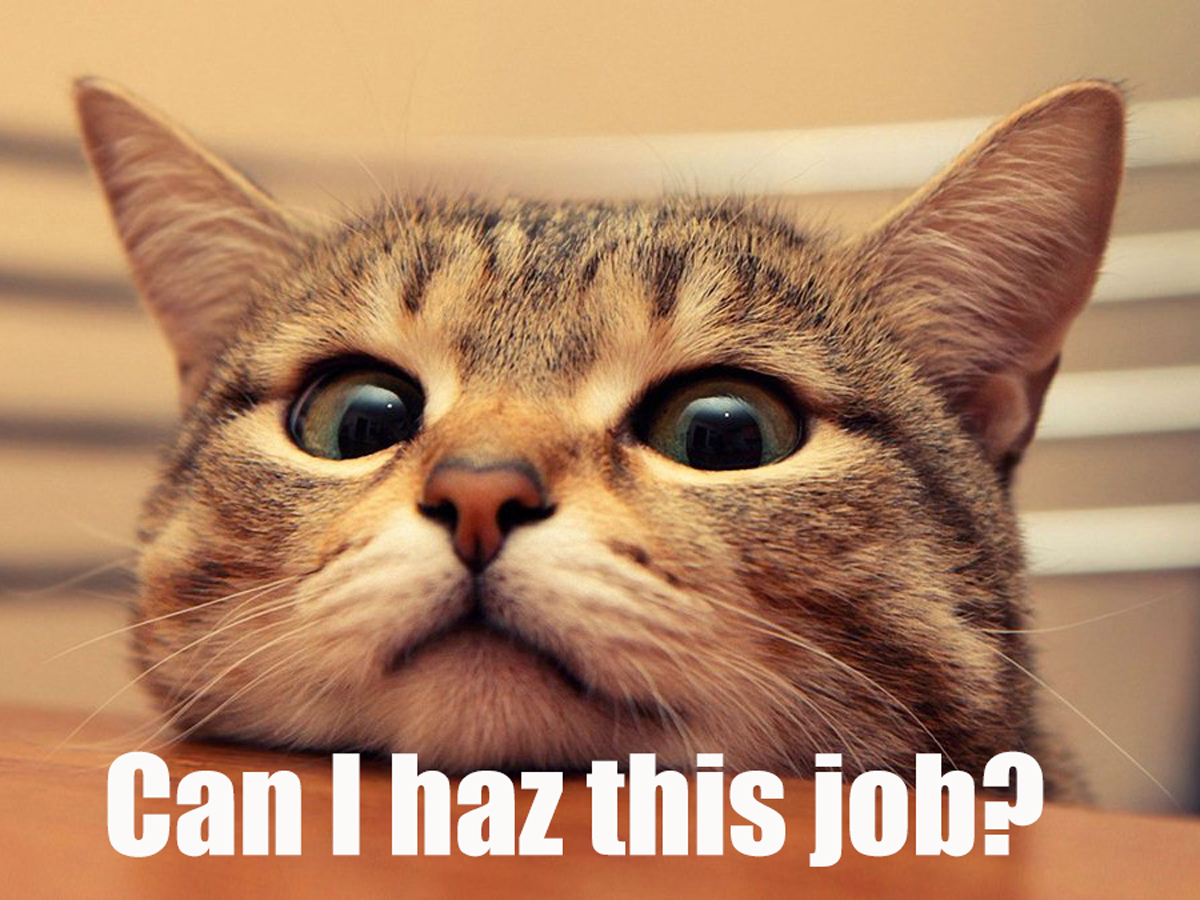 six steps for nailing the job application rife magazine cat funny pictures captions high quality resolutions