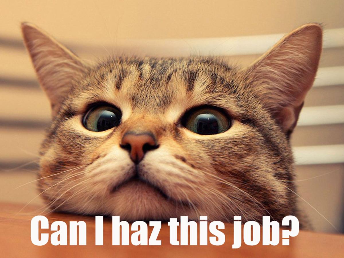 Funny Cat Websites