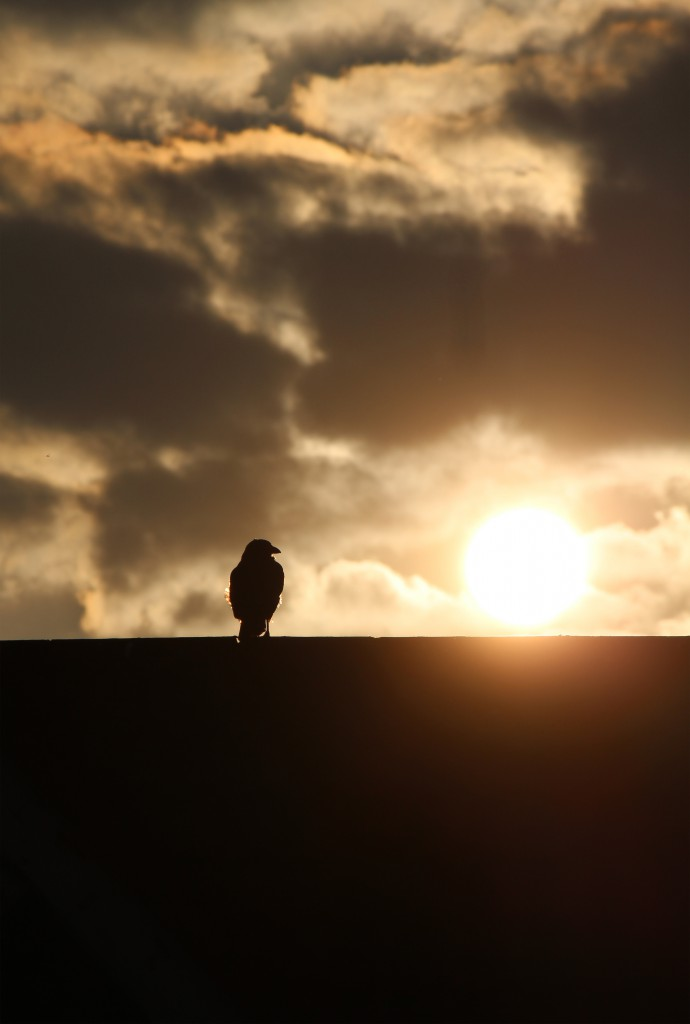 A crow sat upon a roof of a house at the early hours during sunrise