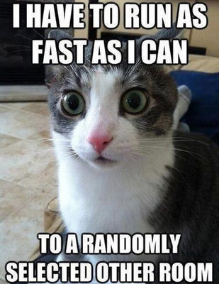 Blank faced cat meme stating: I have to run as fast as i can to a randomly selected other room