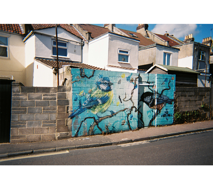 easton graffitti bluebirds
