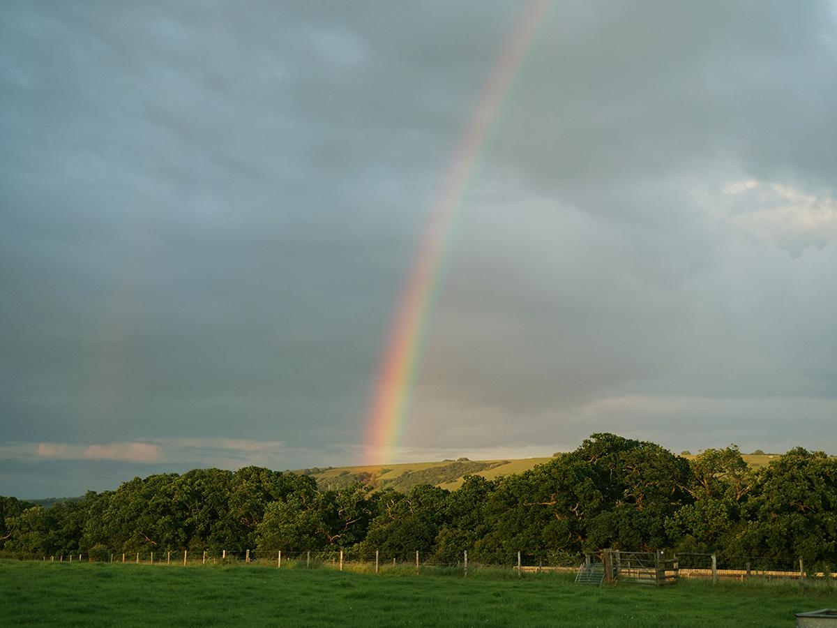 Rainbow FIINAL